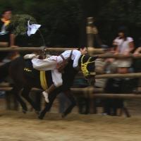 d-winning-a-prize-negita
