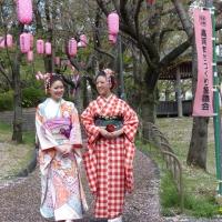 2013ooyamasakura11