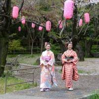 2013ooyamasakura15