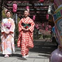 2013ooyamasakura3