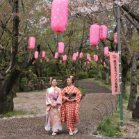 2013ooyamasakura8