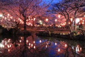 大山千本桜