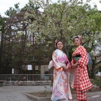 2013ooyamasakura12