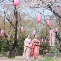 2013ooyamasakura2