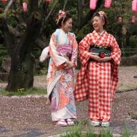 2013ooyamasakura6